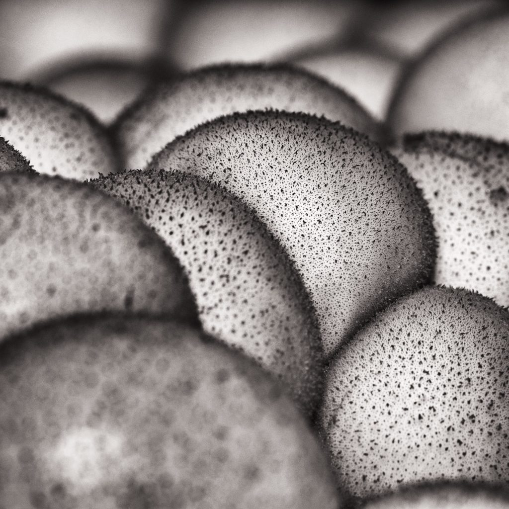 An abstract black and white shot of puffalls.