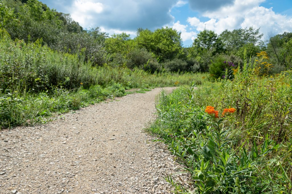 A photo showing a gravel trail cutting through an open prairie-like plant community, with an orange flower in the corner.