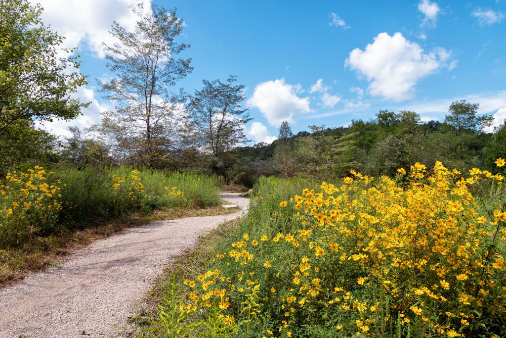 A gravel trail winding through a field with yellow wildflowers and other plants.