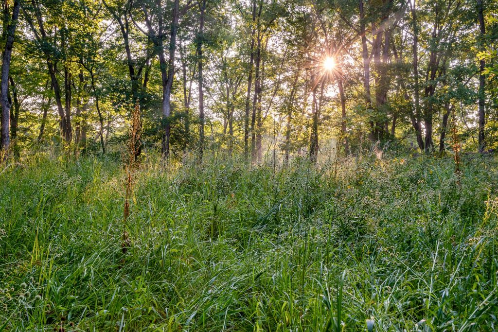 A photo of the morning sun shining on a grassland with a line of trees in the background.