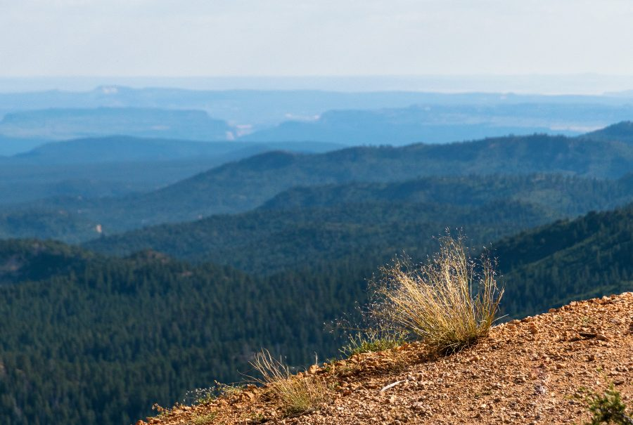 A single plant on the edge of a cliff overlooking a vast landscape at Bryce Canyon National Park.